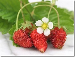 red-wonder-wild-strawberry-75-seeds-3.gif